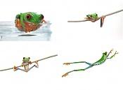 modelado de una rana-ranita.jpg