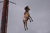 Fotos Graciosas divertidas con Humor-hanging_goat.jpg