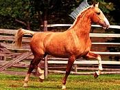 Loft-caballo-f1.jpg