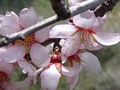Flora-vicentametler.jpg
