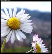 Flora-bitxilore_01.jpg
