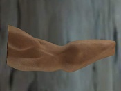 anatomia-11a.jpg