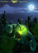 Fireflies: a   light   digestion-camaleon.jpg