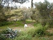 Fotos Naturaleza-caballo.jpg