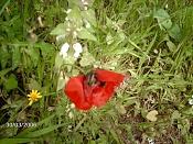 Fotos Naturaleza-abeja.jpg