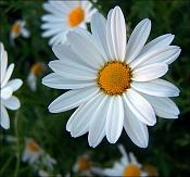 Flora-100_2630.jpg