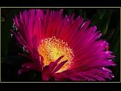 Macrofotografia-flor_fuego.jpg