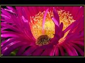 Macrofotografia-flor_con_obrero.jpg