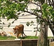 Fauna-felinos.jpg