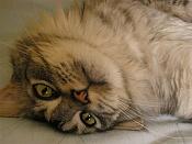 Fauna-p5140103.jpg
