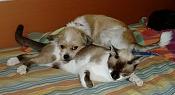 Fauna-gato1.jpg