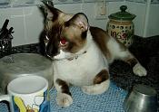 Fauna-gato2.jpg