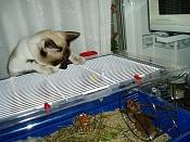 Fauna-gato3.jpg