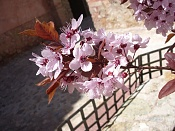 Flora-imgp1693.jpg