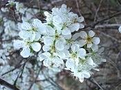 Flora-imgp1715.jpg