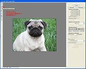Pregunta de photoshop CS-dibujo.jpg