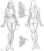 Cierva texturada con problema de fondo       -musculatura_gral_mujer.jpg