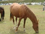 Fauna-dsc00219.jpg