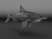 Carcharodon carcharias  Tiburon Blanco -shark01.0.jpg