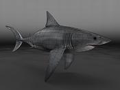 Carcharodon carcharias  Tiburon Blanco -shark01wire.0.jpg
