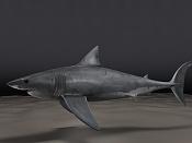Carcharodon carcharias  Tiburon Blanco -shark06.1.jpg