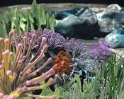 Fondo marino-sub01.jpg