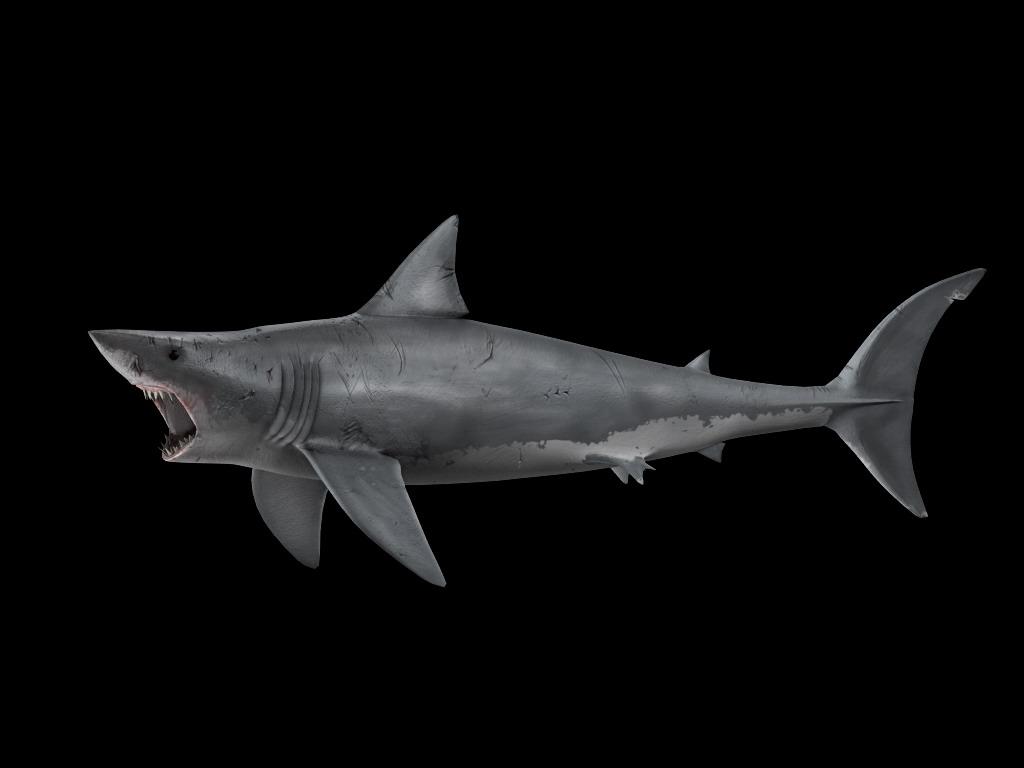 Atractivo Anatomía Del Tiburón Blanco Fotos - Anatomía de Las ...