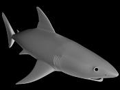 Nuevo tiburon blanco-t5b.jpg