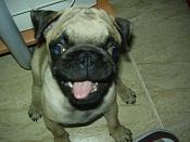 alguien quiere un perro -p9010045.jpg