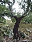 Fotos Naturaleza-lady-alcornoque.jpg