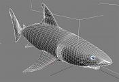 Nuevo tiburon blanco-t9-wire.jpg