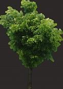 duda sobre imagenes difuminadas en mapas de opacidad-55-tree-textures-39.jpg