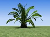 Cuestion acerca del Onyx Tree-v_palm_phoe_cana.jpg