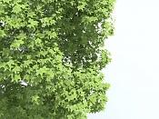 Cuestion acerca del Onyx Tree-color-bitmap.jpg