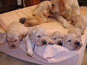 Regalo cachorritos de raza-image001.jpg