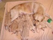 Regalo cachorritos de raza-image002.jpg