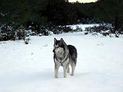 Modelado lobo-dsc00316.jpg