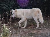 Modelado lobo-dsc02734.jpg