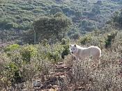 Modelado lobo-p36-11.11.02.jpg