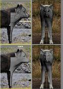 Modelado lobo-makinglobo16jz8.jpg