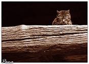 Fauna-defensa.jpg