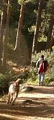 Kedadas afotadoras-web_bosque_maldito_04.jpg