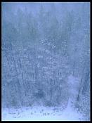 Desde mi ventana-fmw_snow.jpg