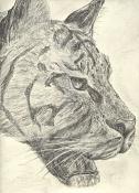 Dibujos, esbozos    etc-tigre-a-carboncillo.jpg