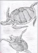 Dibujos, esbozos    etc-tortugas.jpg