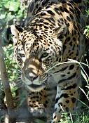 Fauna-animales1.jpg
