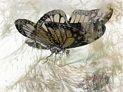 mariposa-buterflay.jpg