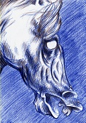 Mis dibujos-caballo2.jpg