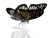 mariposa-mariposa.jpg