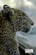 Fauna-zoo.jpg